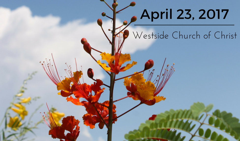 News for April 23, 2017 for Westside Church of Christ in El Paso, Texas