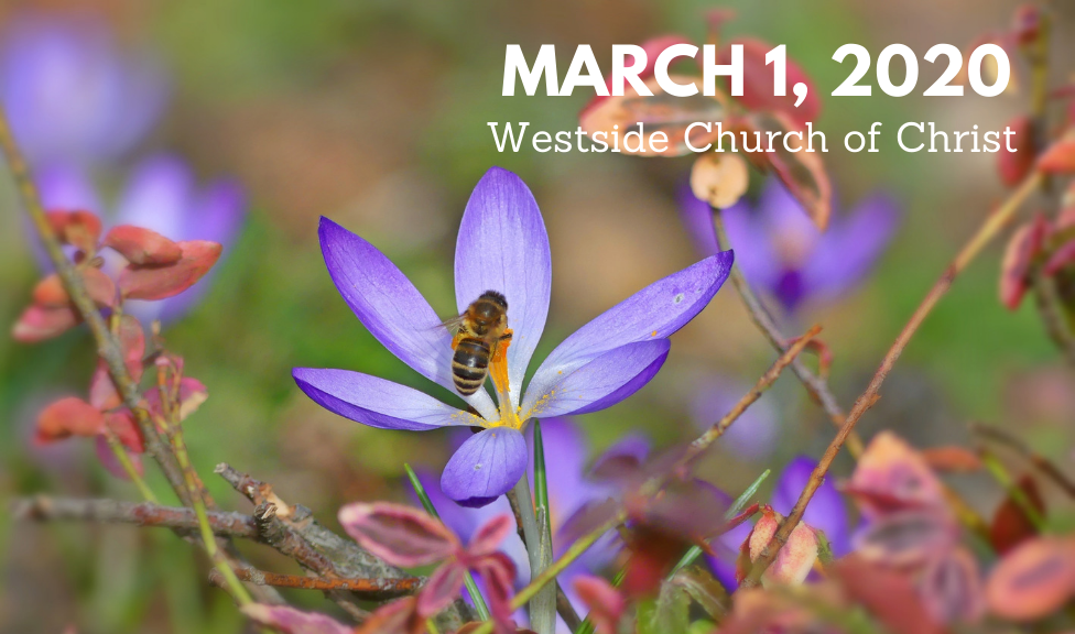 Westside News for March 1, 2020